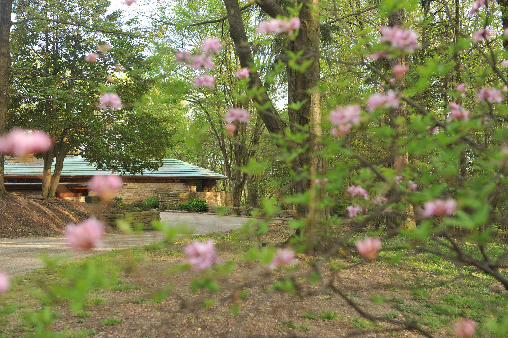 Kentuck Knob Hidden by Spring Blooms